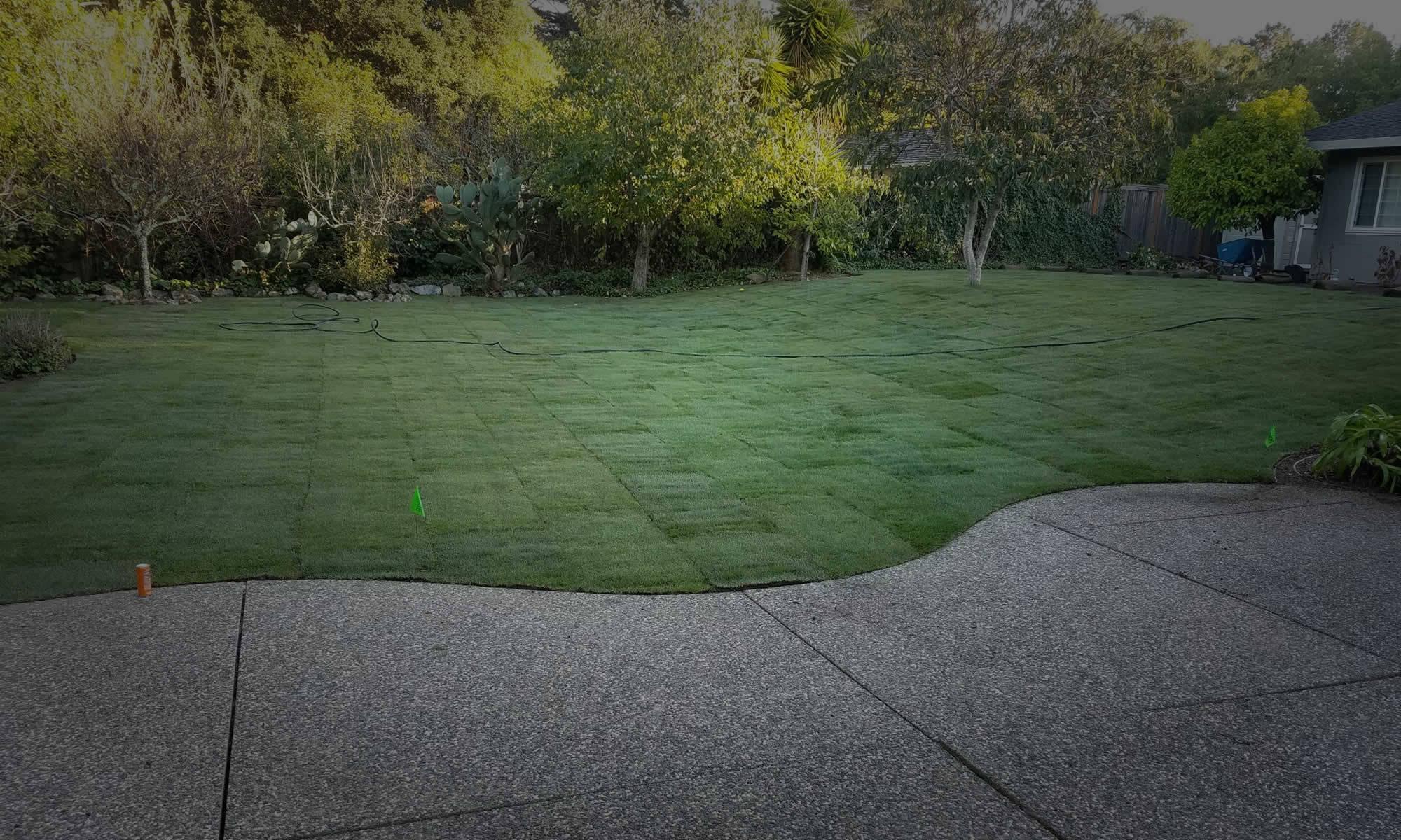 full-garden-service-burlingame-sl3-2000x1200